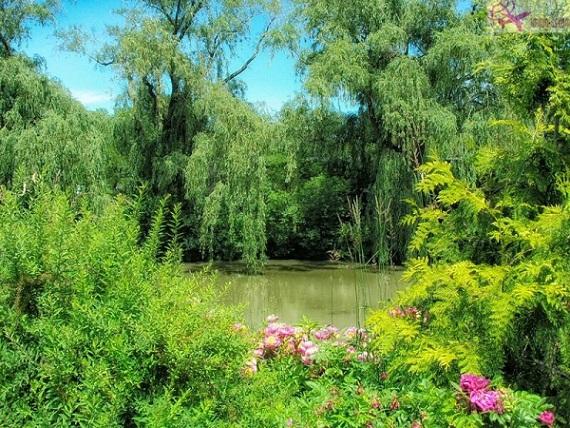 الحديقة النباتية شيكاغو
