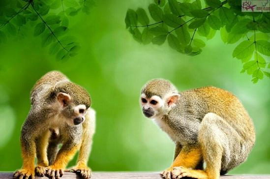 غابة القرود ميامي