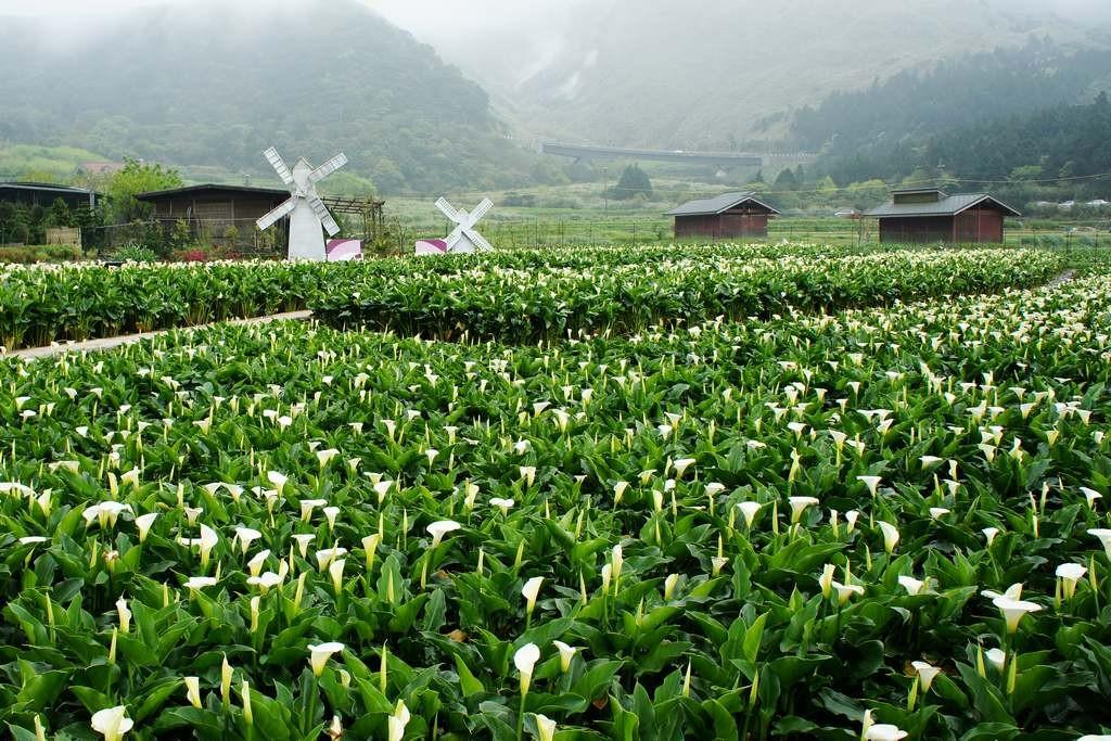 جبل يانغ مينغ