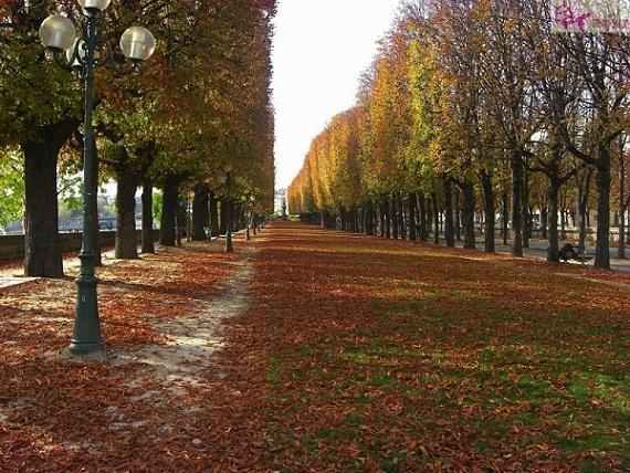 شوارع باريس في الخريف
