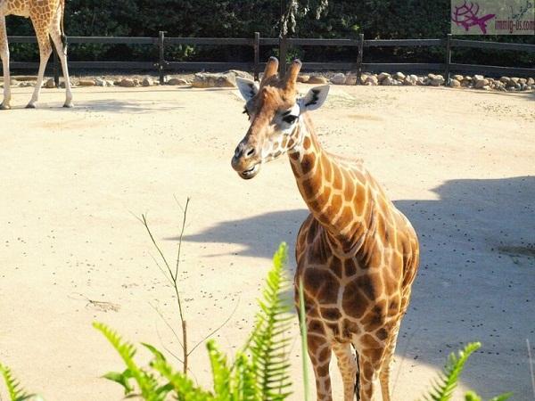 حديقة حيوانات تارونجا