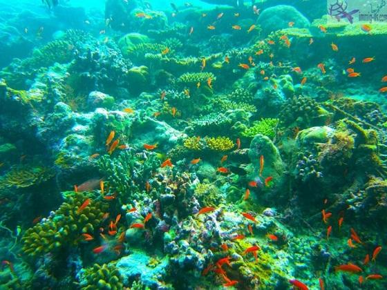 صور جزيرة آرى المرجانية