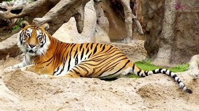 حديقة حيوان أنتويرب