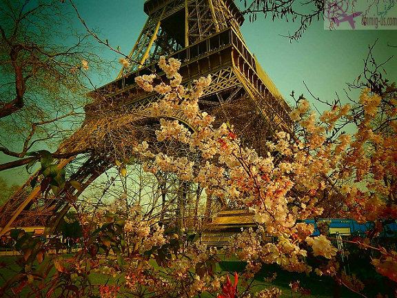 الزهور بجوار برج ايفل