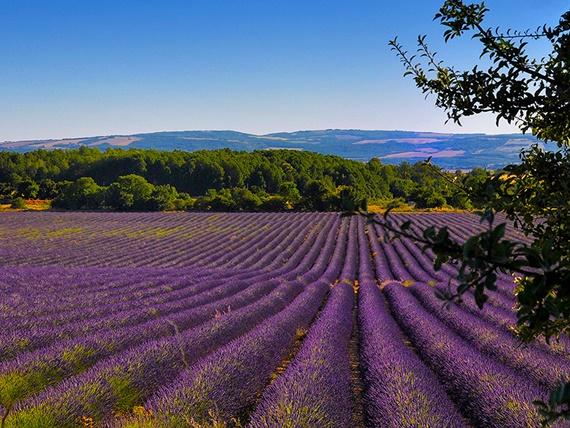 الحقول الملونة فى مدينة غراس الفرنسية