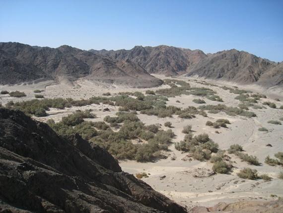 جمال الصحراء فى محمية وادى الجمال