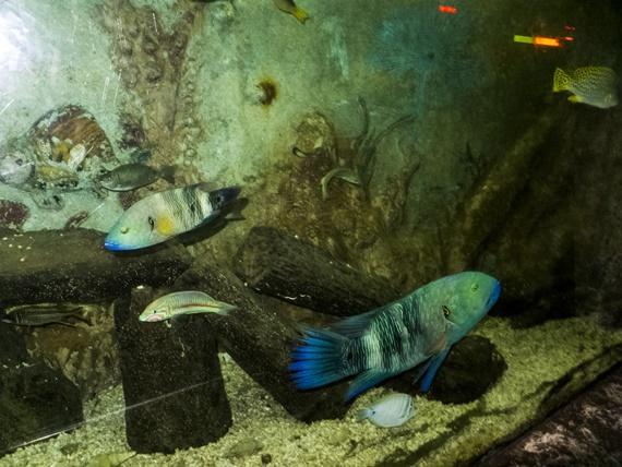 أسماك نادرة فى متحف الأحياء المائية