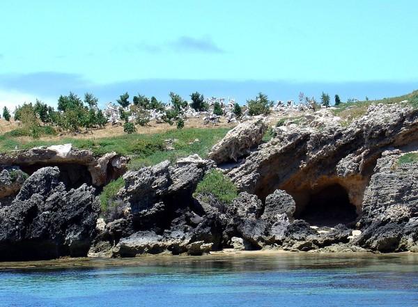 جزيرة البطريق في بيرث