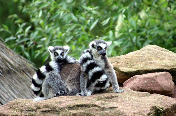 حديقة الحيوانات ميلوز