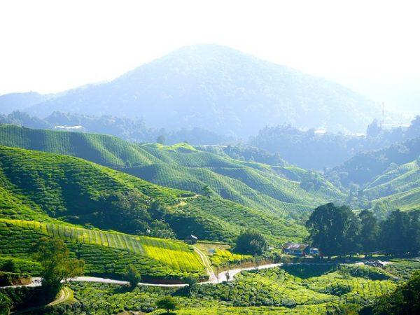 مرتفعات الكاميرون: أشياء يمكنك القيام بها في مرتفعات كاميرون