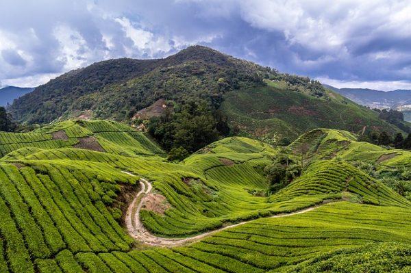 الطبيعة في مرتفعات الكاميرون