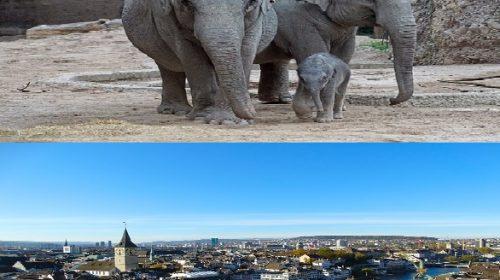 تقرير عن حديقة حيوان زيورخ سويسرا والأنشطة والفنادق القريبة من Zoo Zurich