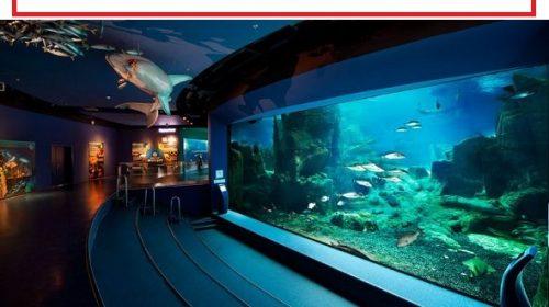 أفضل مدن الالعاب المائية في اسطنبول والفنادق القريبة منها