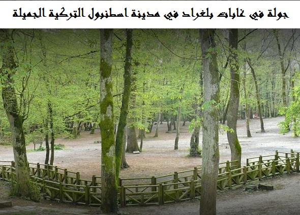 غابة بلغراد اسطنبول