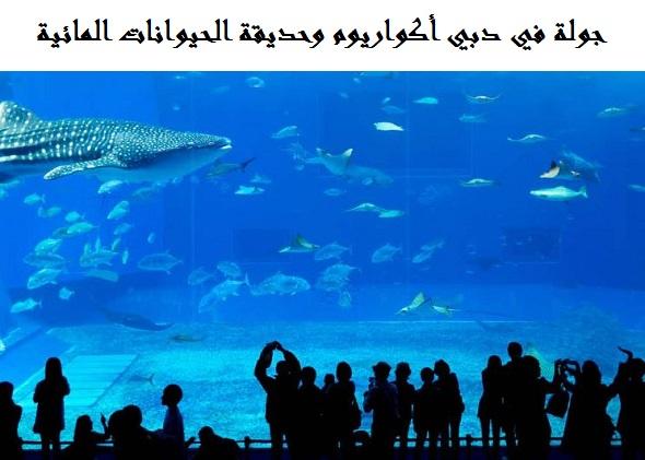 اكواريوم دبي | الأنشطة السياحية | الفنادق والمطاعم القريبة