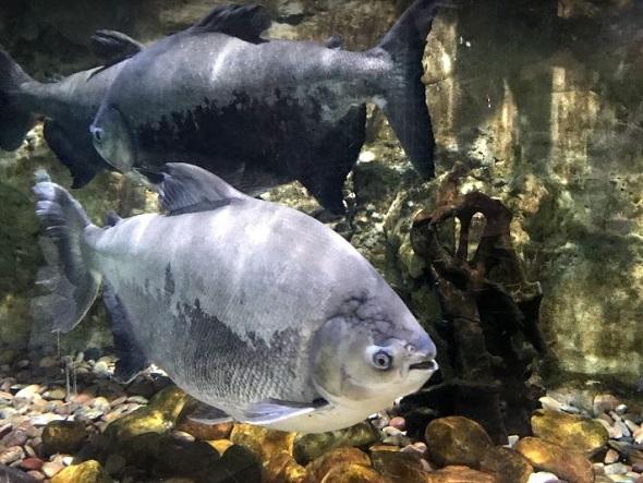 mall aquarium دبي أكواريوم