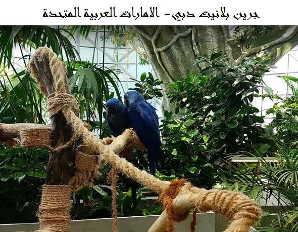 صورة جرين بلانيت دبي | الفعاليات والأنشطة | الفنادق القريبة