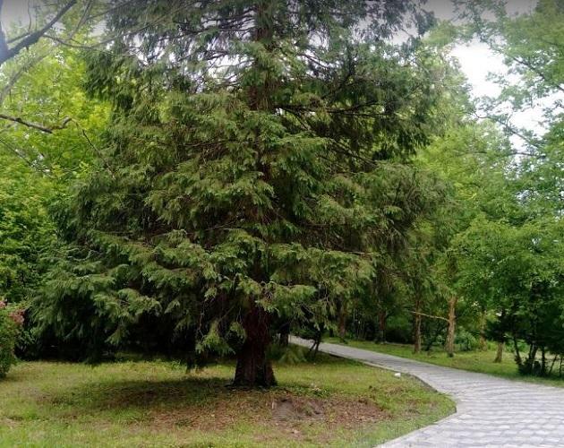 الحديقة النباتية جورجيا