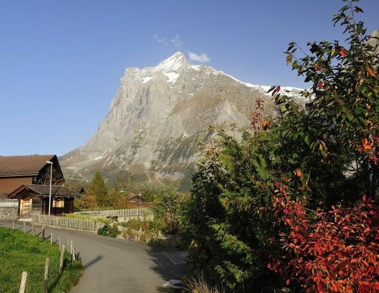 جريندلفالد سويسرا
